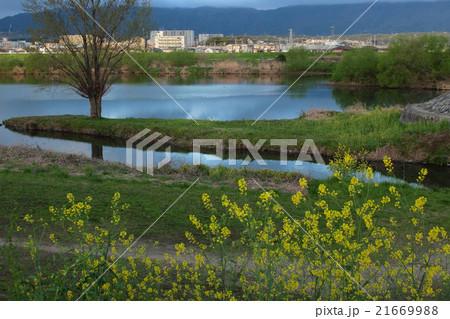 京都 桂川と天神川の合流地点風景 21669988