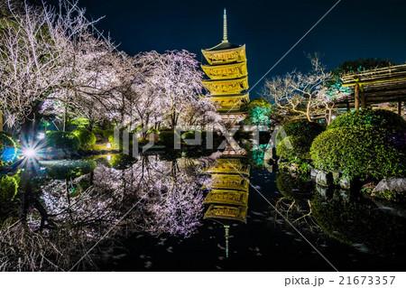 東寺夜桜ライトアップ 21673357
