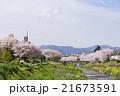 桜並木 川沿 サイクリングロードの写真 21673591