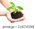植物 手 支えるの写真 21674398