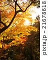高尾山の紅葉 21678618
