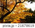 高尾山の紅葉 21678619