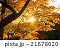 高尾山の紅葉 21678620