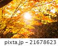 高尾山の紅葉 21678623