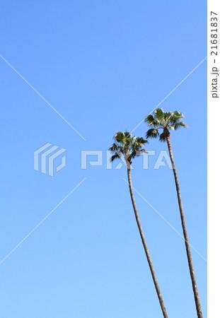 パームツリー 21681837