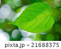 新緑の葉 エコイメージ 21688375