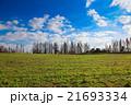 メタセコイア 樹木 アケボノスギの写真 21693334