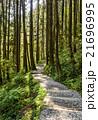 林 森 樹林の写真 21696995