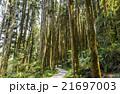 林 森 樹林の写真 21697003