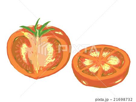 トマト 断面 のイラスト素材