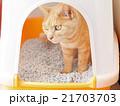 猫、トイレ中 21703703