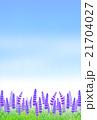 ラベンダー畑 21704027