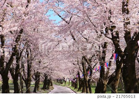 赤城南面千本桜(日本さくら名所100選) 21705013