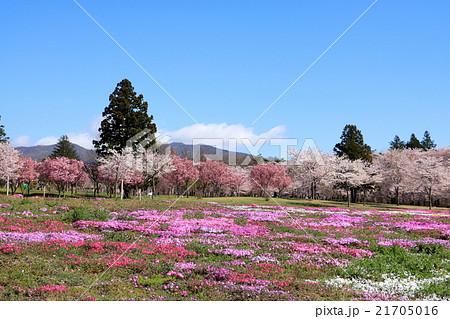 赤城南面千本桜(日本さくら名所100選) 21705016