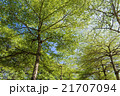 木 ツリー 樹の写真 21707094