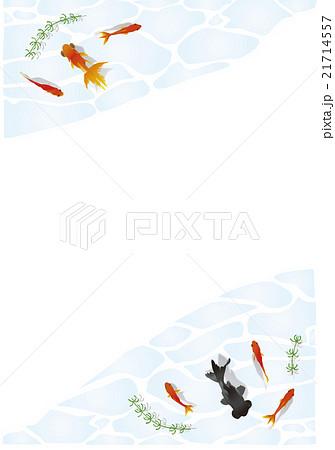 泳ぐ金魚フレーム A4サイズ縦 21714557