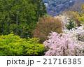 清涼寺 21716385