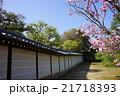 御室仁和寺の桜 21718393