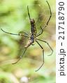 クモ 蜘蛛 スパイダーの写真 21718790
