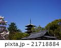 御室桜と五重塔 21718884