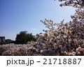 桜の海 21718887