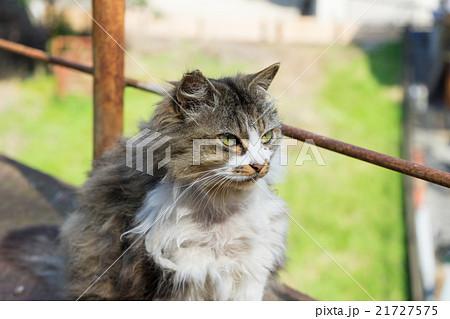 毛の長い野良猫 21727575