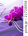 ピンクの胡蝶蘭 21728956