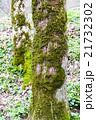 樹木 樹 ツリーの写真 21732302