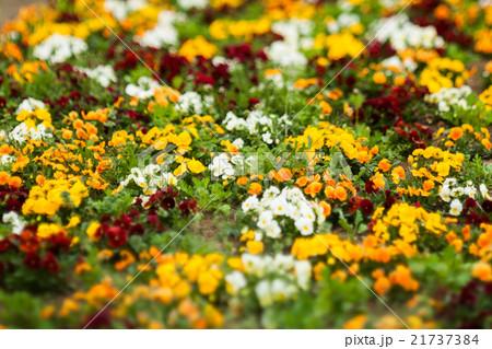 ガーデ二ング, 庭の花壇 21737384