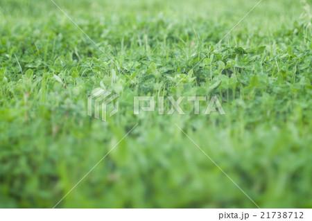 緑の草のエコイメージ 21738712