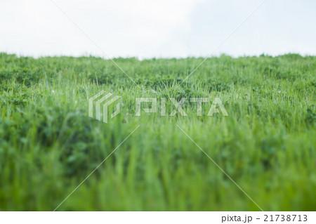 緑の草原と空 21738713