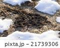 野ネズミの穴 21739306