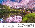 東京夜桜 21744074