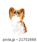 犬 パピヨン 21752668