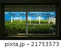マリファナ合法と医療大麻 21753573