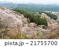桜 吉野山 吉野桜の写真 21755700