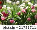 花 フラワー お花 21756711
