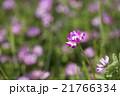 植物 草花 花の写真 21766334