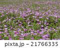 植物 草花 花の写真 21766335