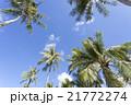 青空と椰子の木 21772274