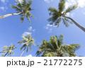 青空と椰子の木 21772275