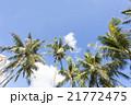 椰子の木 青空 夏の写真 21772475