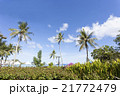 椰子の木と青空 21772479