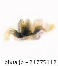paint watercolour splatter watercolors spotn 21775112