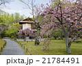京都府 渉成園 風景の写真 21784491