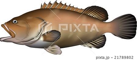 クエ(魚) ベクター 21789802