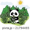 野生 動物 パンダのイラスト 21794493