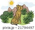 野生動物 チーター 21794497