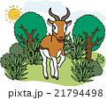 野生動物 ガゼル 21794498