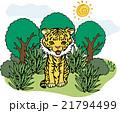 野生動物 トラ 21794499